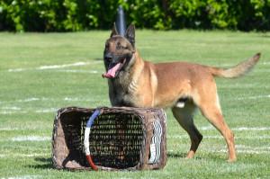 Education canine